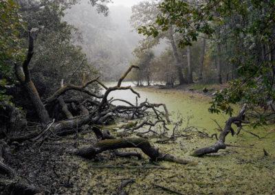 The Floods #30